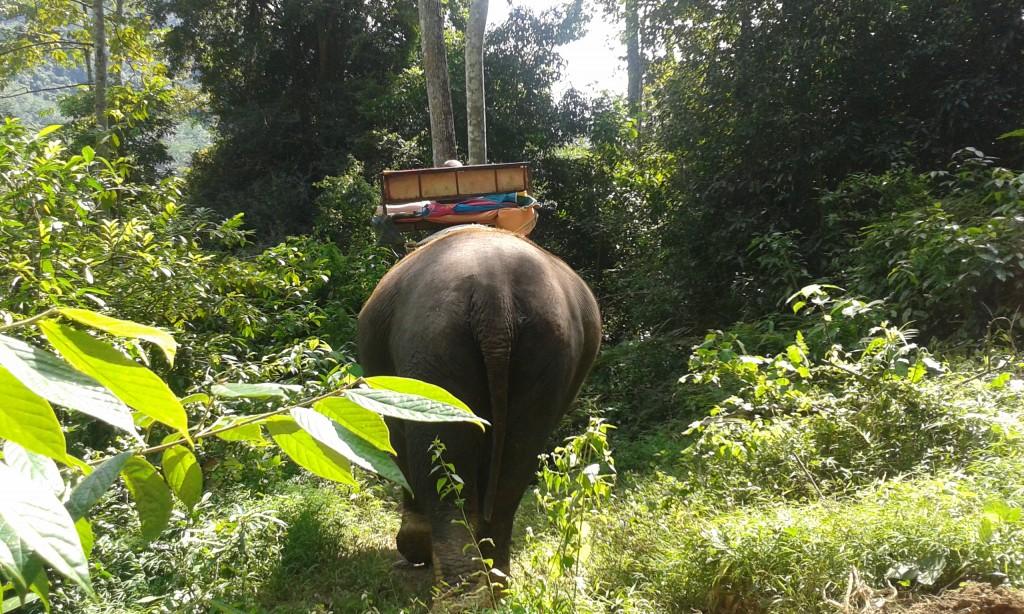 03-Elephant trekking_45