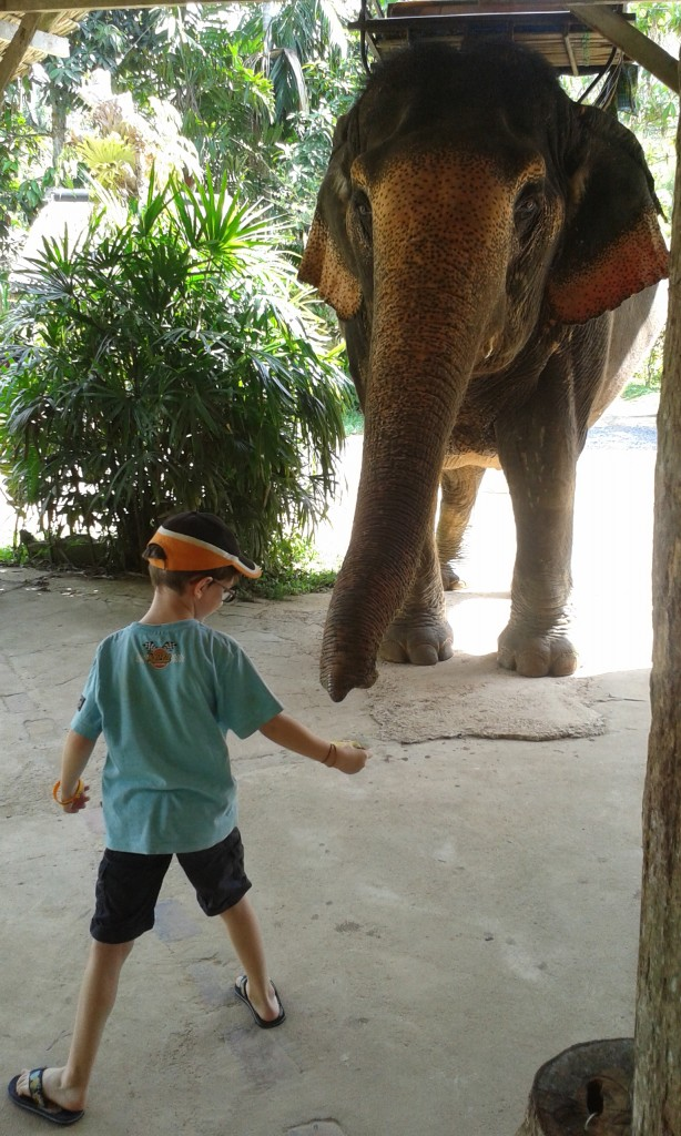 03-Elephant trekking_75